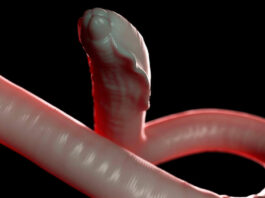 what do tapeworms look like
